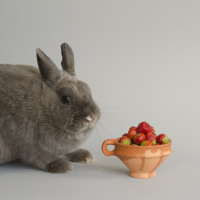 replica of a Dutch berry cup  / 17th century (with 21st century rabbit)